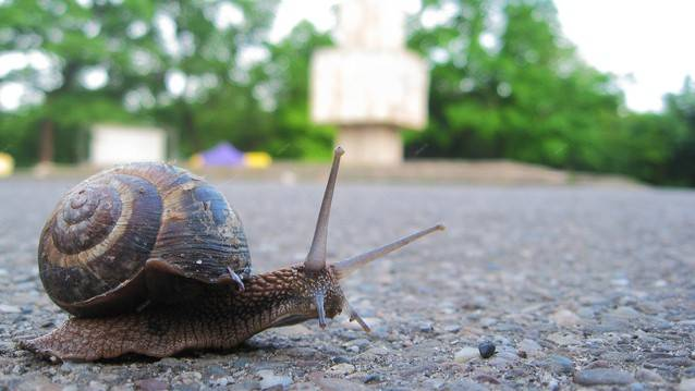curious-snail-in-the-park-2-1057838-638x358