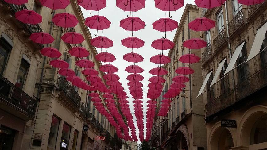 Montpellier rose