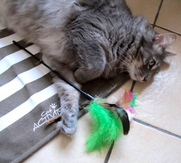 plumeau l ile aux chats